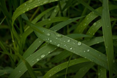 Morgon efter regnet