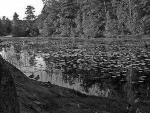 Sommarkväll vid Söderbysjön 1